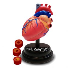 Eastcolight - AR Cardiology Professional Model